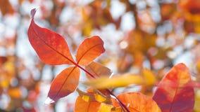 Ramos de árvore coloridos na luz solar Fotos de Stock Royalty Free