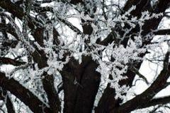 Ramos de árvore congelados com gelo de geada na manhã do inverno na névoa foto de stock royalty free