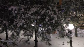 Ramos de árvore congelados nas ruas filme