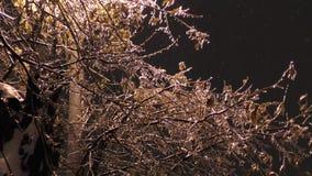 Ramos de árvore congelados nas ruas video estoque