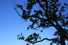 Ramos de árvore contra o céu Foto de Stock