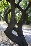 Ramos de árvore curvados Fotos de Stock