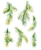 Ramos de árvore da abeto-agulha do Natal da aquarela Fotos de Stock Royalty Free