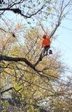 Ramos de árvore de poda do Arborist Foto de Stock Royalty Free