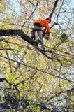 Ramos de árvore de poda do Arborist Imagens de Stock Royalty Free