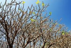 Ramos de árvore desencapados Imagem de Stock Royalty Free