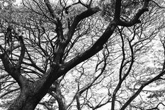 Ramos de árvore desencapados Fotografia de Stock Royalty Free