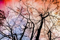 Ramos de árvore desencapados abstratos, por do sol do céu, ramos desencapados de uma árvore imagem de stock