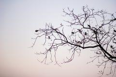 Ramos de árvore desencapados abstratos, preto e branco Foto de Stock Royalty Free