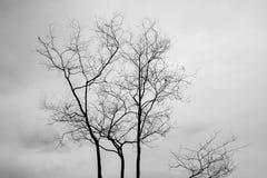 Ramos de árvore desencapados abstratos, preto e branco Fotos de Stock