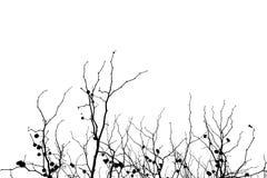 Ramos de árvore desencapados eretos contra um fundo branco Foto de Stock Royalty Free