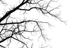 Ramos de árvore despidos em um fundo branco Imagem de Stock