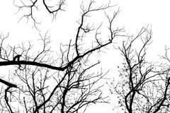 Ramos de árvore despidos em um fundo branco Fotografia de Stock