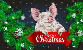 Ramos de árvore do abeto com porco O fundo do encanto do Feliz Natal com ramo do pinho e os cumprimentos text Ano novo feliz 2019 ilustração do vetor