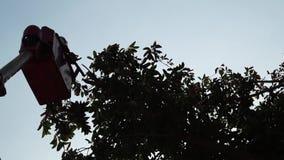 Ramos de árvore do corte e da guarnição dos trabalhadores com o auxílio da serra de cadeia a bordo do alimentador tele com cubeta vídeos de arquivo