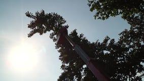 Ramos de árvore do corte e da guarnição dos trabalhadores com o auxílio da serra de cadeia a bordo do alimentador tele com cubeta video estoque