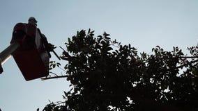 Ramos de árvore do corte e da guarnição dos trabalhadores com o auxílio da serra de cadeia a bordo do alimentador tele com cubeta filme