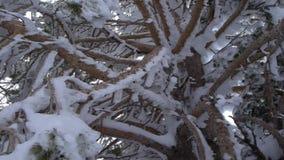 Ramos de árvore do gelo dos detalhes vídeos de arquivo