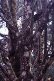 Ramos de árvore do monte imagem de stock royalty free