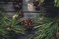 Ramos de árvore do Natal com cones do pinho e anis na parte traseira rústica Fotografia de Stock