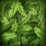 Ramos de árvore do Natal em escuro - fundo verde Eps 10 ilustração royalty free