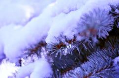 Ramos de árvore do Natal na neve Foto de Stock