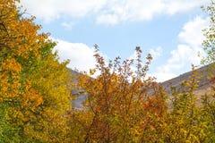 Ramos de árvore do outono com folhas amarelas imagens de stock royalty free