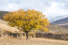 Ramos de árvore do outono com folhas amarelas imagem de stock