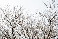 Ramos de árvore em um fundo branco Imagens de Stock Royalty Free