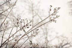 Ramos de árvore encerrados no gelo Foto de Stock Royalty Free