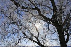 Ramos de árvore gelados contra o céu azul fotografia de stock royalty free