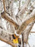 Ramos de árvore grandes com bandeiras do amuleto Fotografia de Stock Royalty Free
