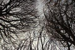 Ramos de árvore, inverno, floresta, teste padrão, silhueta, natureza, ramo, claraboia, fria fotografia de stock royalty free