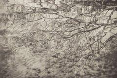 Ramos de árvore na água Foto de Stock