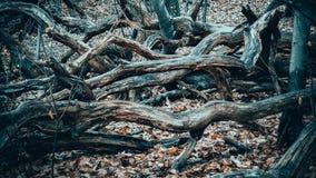Ramos de árvore na floresta Imagem de Stock