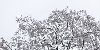 Ramos de árvore na geada Fotos de Stock