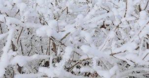 Ramos de árvore na geada video estoque