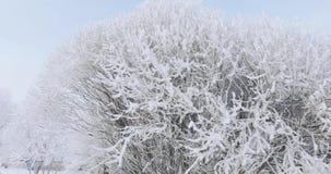 Ramos de árvore na geada filme