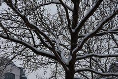 Ramos de árvore nevado Fotografia de Stock Royalty Free