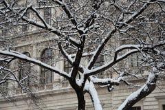 Ramos de árvore nevado Foto de Stock Royalty Free