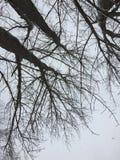 Ramos de árvore nevado da neve caída fresca Imagens de Stock Royalty Free