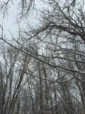 Ramos de árvore nevado da neve caída fresca Imagem de Stock Royalty Free