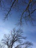 Ramos de árvore no azul Imagem de Stock Royalty Free