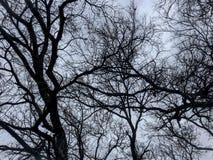 Ramos de árvore no céu azul imagem de stock royalty free