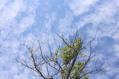 Ramos de árvore no céu azul Fotos de Stock