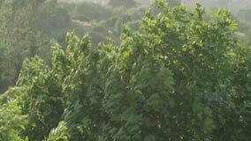 Ramos de árvore no forte vento filme
