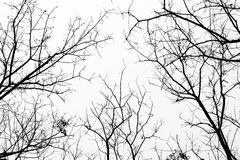 Ramos de árvore no fundo branco Fotos de Stock Royalty Free