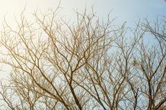 Ramos de árvore no fundo do céu azul Imagem de Stock Royalty Free