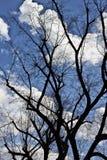 Ramos de árvore imagens de stock royalty free