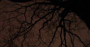 Ramos de árvore no parque da noite vídeos de arquivo